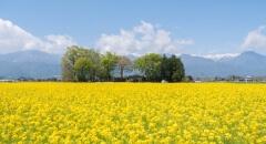 全國各地的星野集團度假設施將送上春暖花開的資訊